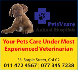 Veterinarians-Pets V Care Animal Hospitals